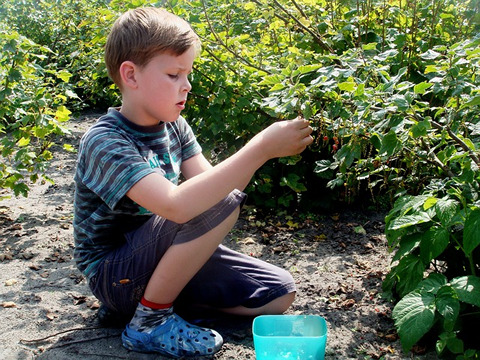 boy picking fruit